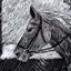Horses Grid